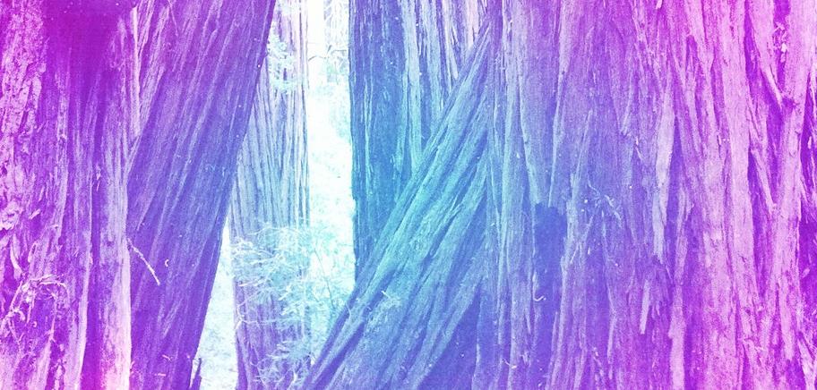 RedwoodsHipstamatic